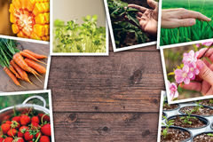Agriculture photo collage. On wooden background as copy space Royalty Free Stock Images