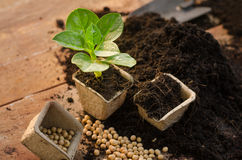 Agriculture,Plant,Seed,Seedling,Plant Growing on paper pot Royalty Free Stock Photos