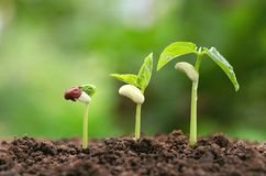 agriculture plant seeding growing step concept in garden and su royalty free stock image