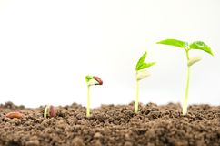 agriculture plant seeding growing step concept on white backgro royalty free stock image