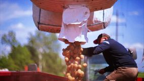 Agriculture potatoes stock video footage
