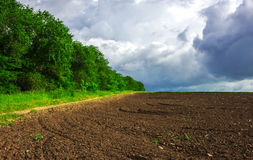 Agriculture. prepared the field for planting . Royalty Free Stock Image