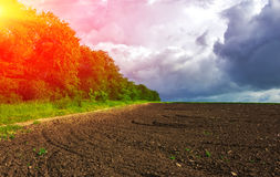 Agriculture. prepared the field for planting at sunset Stock Image