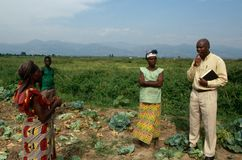 An agriculture project in Uganda. Royalty Free Stock Photos