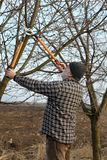 Agriculture, pruning in orchard. Adult farmer pruning apricot tree in orchard using loppers Royalty Free Stock Photos