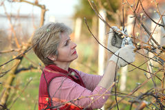 Agriculture, pruning in orchard Royalty Free Stock Image