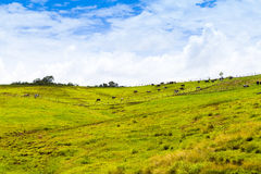Agriculture in Puerto Rico. Agriculture in Hot Puerto Rico Royalty Free Stock Image