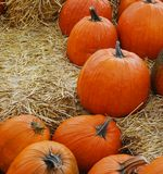 Agriculture pumpkins Stock Photo