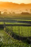 Agriculture  rice field Landscape 01 Royalty Free Stock Photo