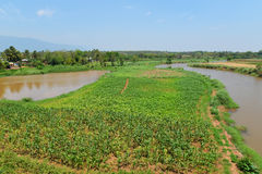 Agriculture river fields Stock Photos