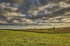 Agriculture - rolling hills with fields in sunset light Royalty Free Stock Images