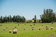 Agriculture rolls Royalty Free Stock Images