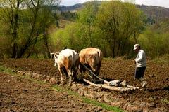 Agriculture rudimentaire dans un village roumain photo libre de droits
