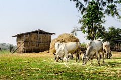Agriculture in rural life of Thailand Stock Photo