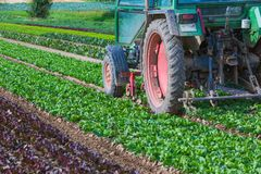 Agriculture with salad and tractor Royalty Free Stock Photo