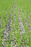 Agriculture (seeding) Royalty Free Stock Photography
