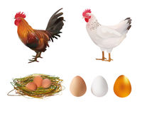 Agriculture Set. Realistic Rooster, Hen, Nest, Eggs. Vector Illustration. Farm. Stock Images