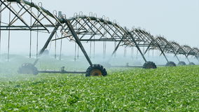 Agriculture, soy bean field watering stock video footage