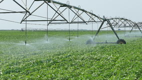 Agriculture, soy bean field watering stock video