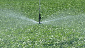Agriculture, soybean field watering stock footage