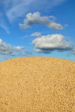 Agriculture, soybean harvest Royalty Free Stock Photos