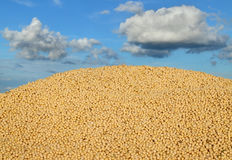 Agriculture, soybean harvest Stock Image