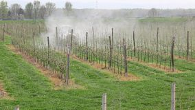 Agriculture, spring spraying of apple orchard stock footage