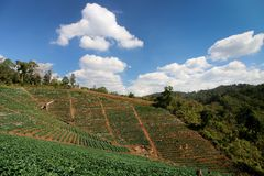 The mountain agricultural and blue sky. stock images