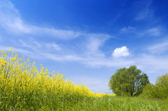 Agriculture summer nature landscape Royalty Free Stock Photography