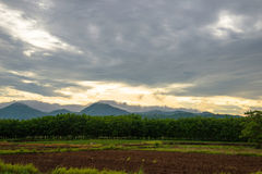 Agriculture sunrise Royalty Free Stock Photo