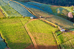 Agriculture, sur le brae Images stock