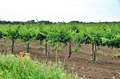 Agriculture in Taman Royalty Free Stock Images
