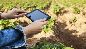 Agriculture technology farmer person using tablet computer. Agriculture technology farmer  person using tablet computer stock photo