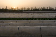 Agriculture tent farm. In China at sunset Stock Photography