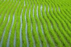 Agriculture in Thailand Stock Photography
