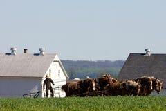 Agriculture traditionnelle avec le cheval de charrue Photographie stock