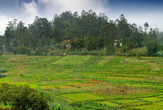 Agriculture in the tropics Royalty Free Stock Images