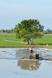 Agriculture in TThailand Stock Images