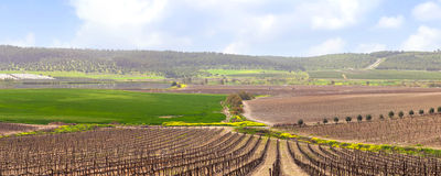 Agriculture valley of Judaic mountains, Israel Royalty Free Stock Image