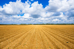 Agriculture vegetable field stock photography