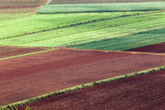 Agriculture Vegetables Crops Royalty Free Stock Photos