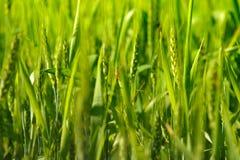 Agriculture verte Photographie stock libre de droits