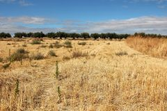 Fields after being harvest in Madrid stock images