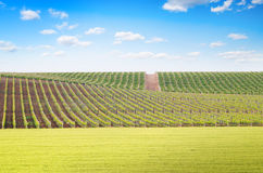 Agriculture and vineyard meadow Royalty Free Stock Photos