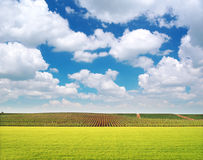 Agriculture and vineyard meadow Royalty Free Stock Photo