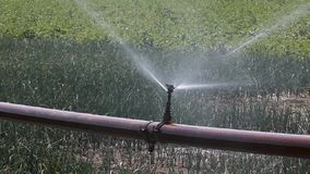 Agriculture watering stock video