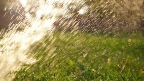 Agriculture. Watreing plant backlit defocused stock video
