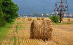 Agriculture / Wheat bale Stock Images