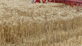 Agriculture,  wheat crop harvest stock footage