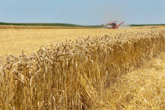 Agriculture, wheat harvest Stock Photo